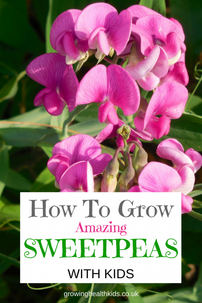 HOW TO GROW SWEETPEAS WITH KIDS
