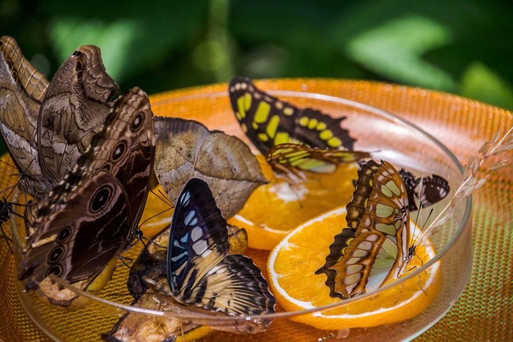 11 ways to attract wildlife.