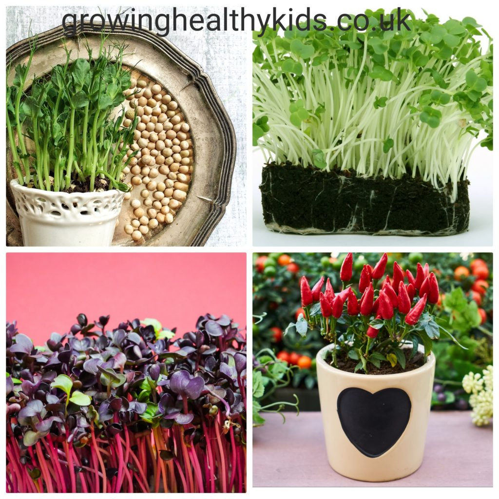 Different micro greens to grow on a windowsill