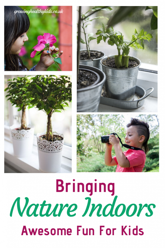 Boy using camera, houseplants, showing ways to bring nature indoors