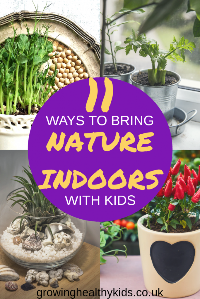 Different ways to bring nature indoors