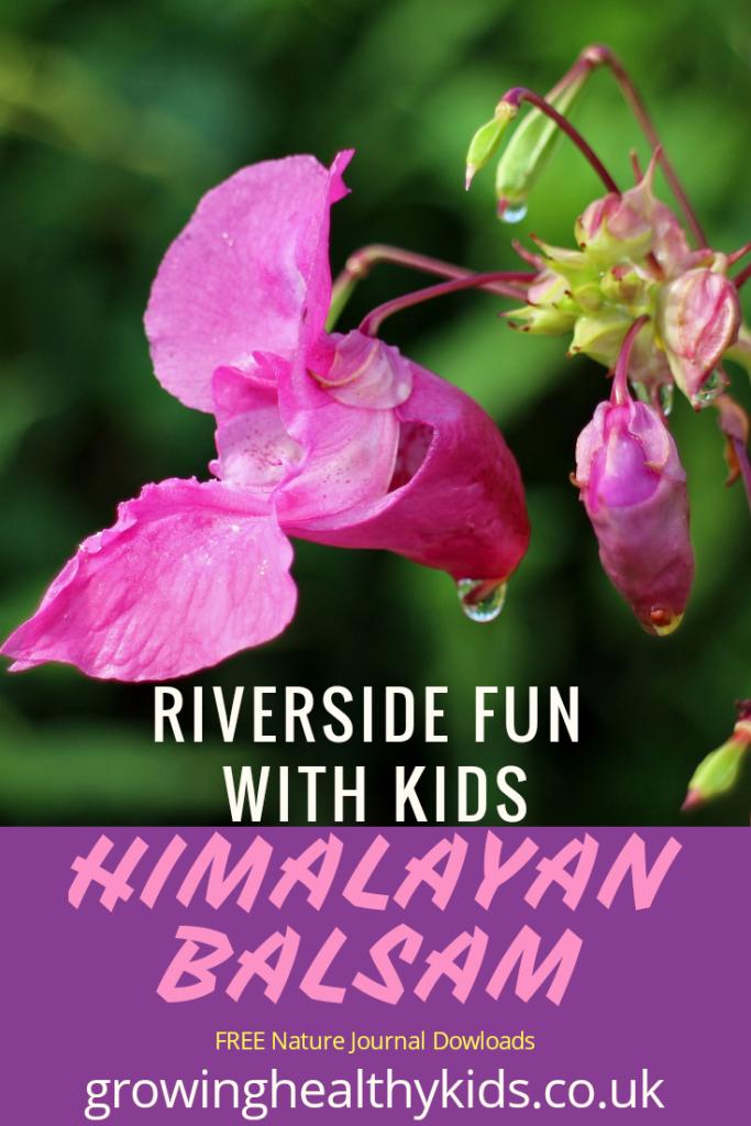 Riverside Fun With Kids-Himalayan Balsam
