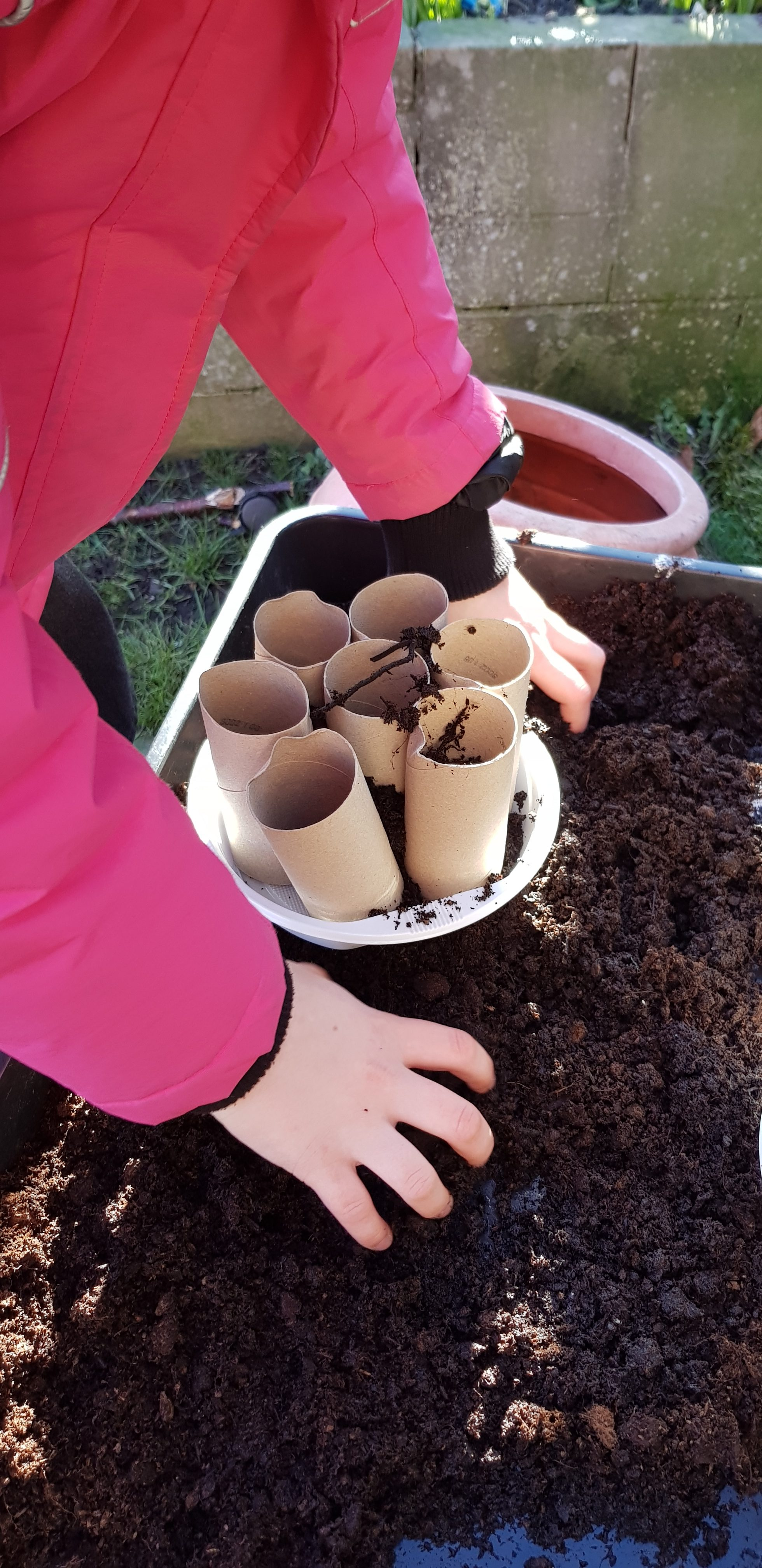 Seed sowing and recycling ideas