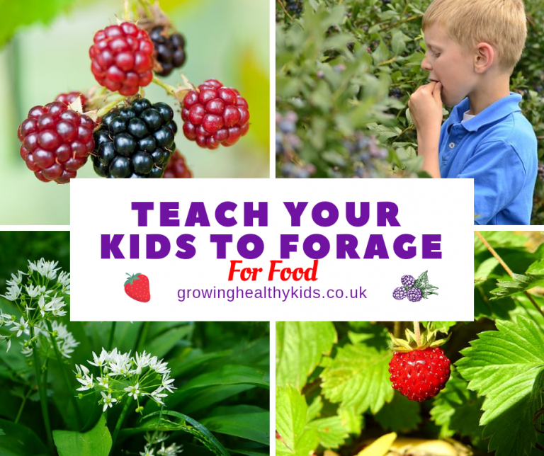 Forage with kids
