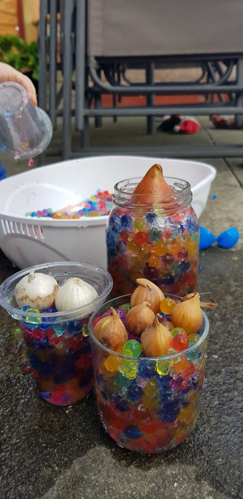 Help your kids grow bulbs to learn about the natural world.
