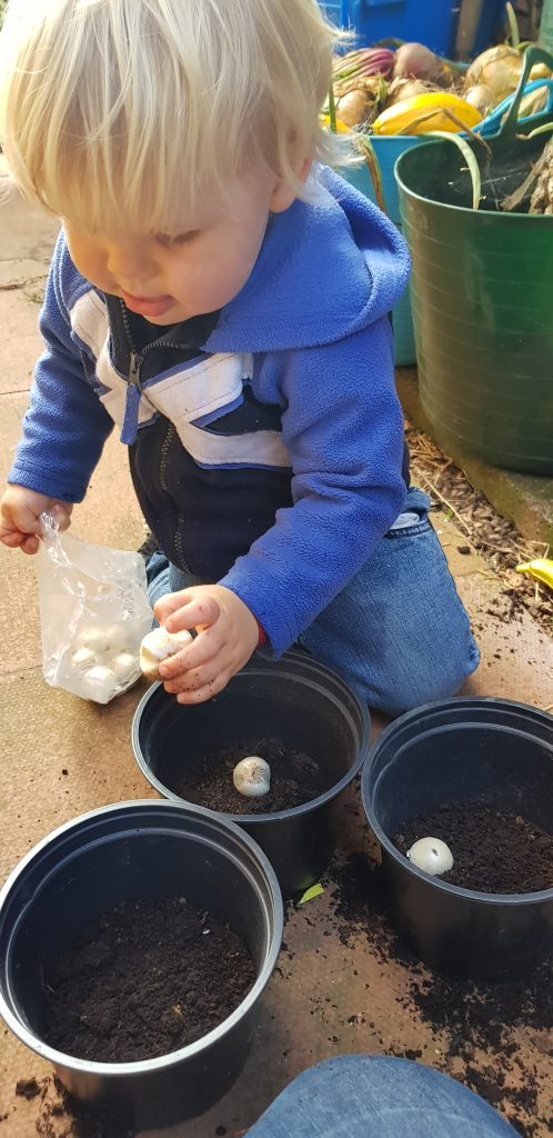 Planting bulbs with kids