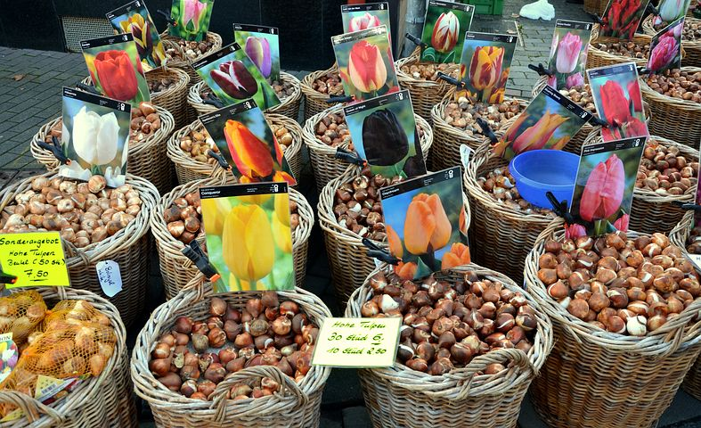 Tulip bulb shopping with the kids, kids love to learn about plants. Use bulbs to teach kids about flowers and seeds, lifecycles and colour.