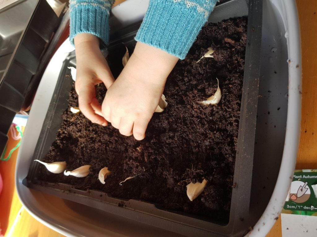Winter Gardening is a fantastic activity to introduce to kids. So many vegetables and fruit you can grow in winter and indoor projects and crafts to try with your kids