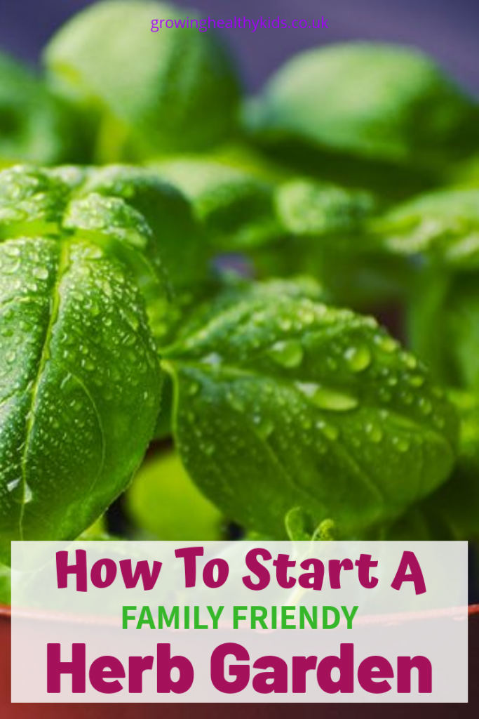 Starting a herb garden is one of the easiest ways to introduce yourself and your family into gardening and growing your own.