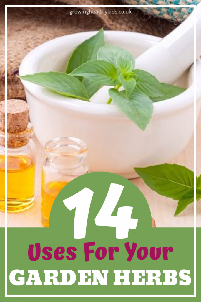 herbal uses for your backyard herbs