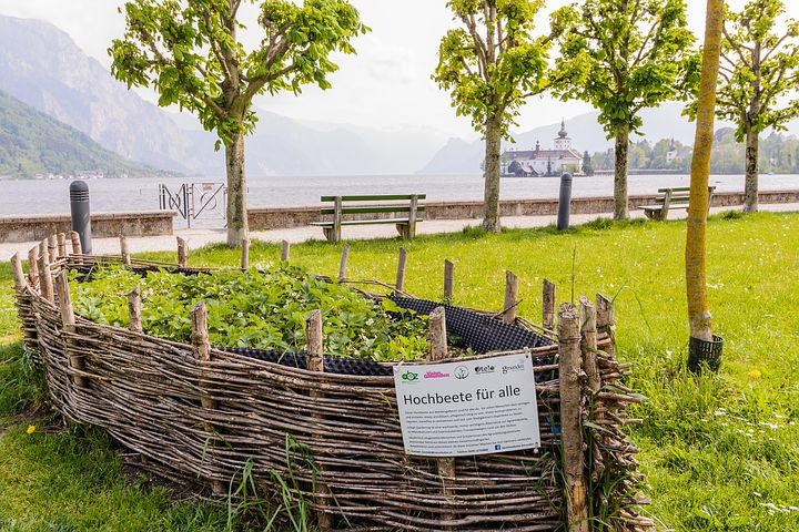 A raised bed made from willow gives a great place to grow