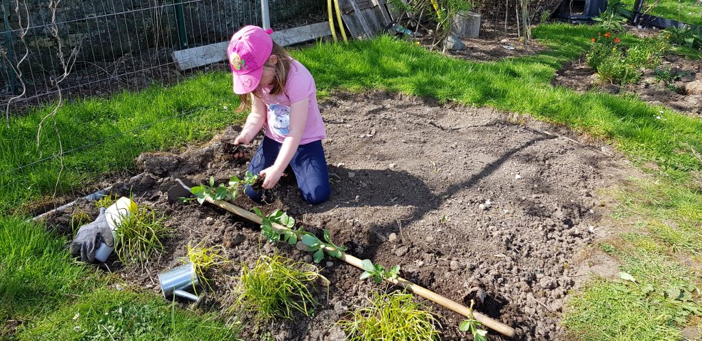 starting an allotment plot tips