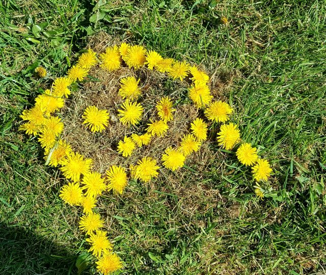 Dandelions make the perfect free food. Super healthy plants and can ne grown or foraged everywhere.