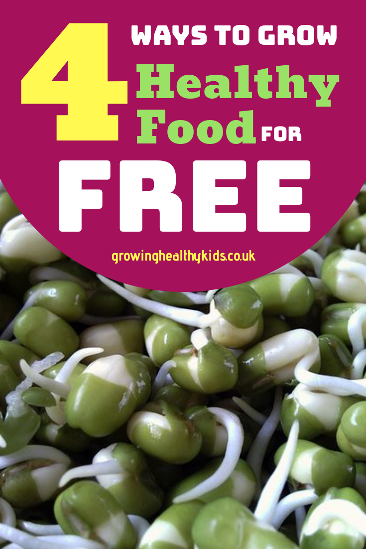 Fast food for free. How to grow healthy food in a matter of days.