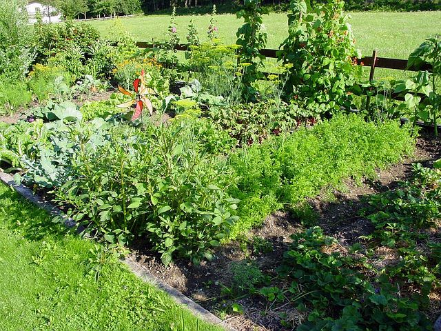 Gardening and weeds go hand in hand. Heres hack to help you deal with some of the common ones.