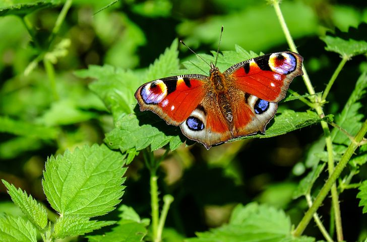 Learn how to make a wildlife garden pond, a habitat for bees, lady bugs, backyard birds and wildlife. Simple ideas for providing habitats, food, shelter and protection like putting up nesting boxes or adding an insect hotel. There's something to do whether its spring summer or Autumn