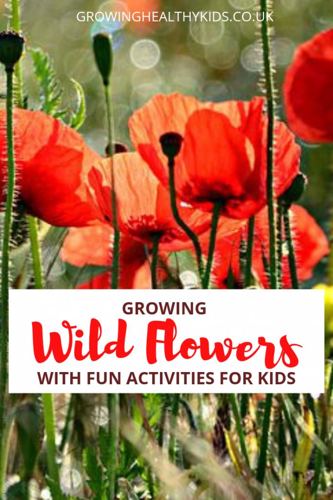 Wildflower poppies