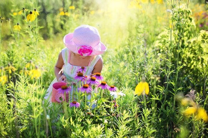 Wildflower activities with Little girl picking wildflowers in the sunny meadow