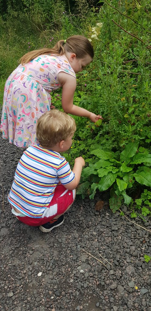 Picking rasberries with chikdren