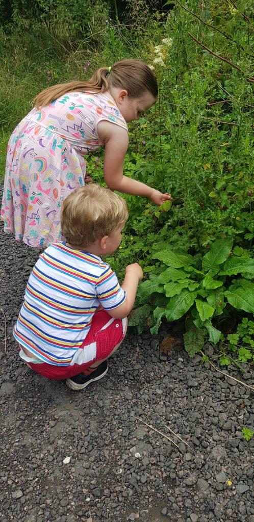 Picking rasberries with chikdren