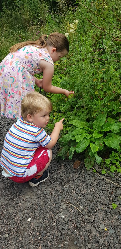 Berry picking with my kids