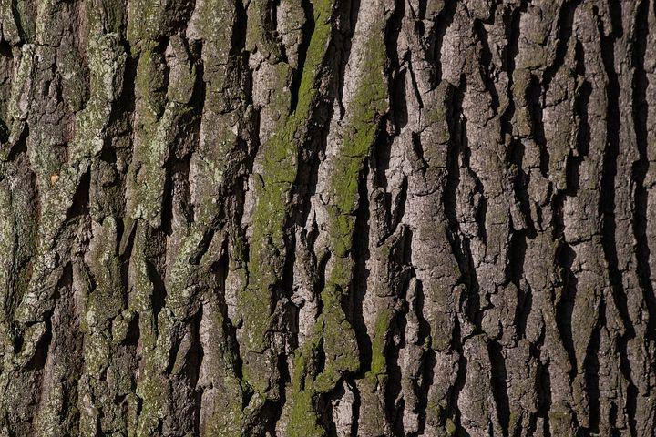 Bark rubbing for outdoor fun