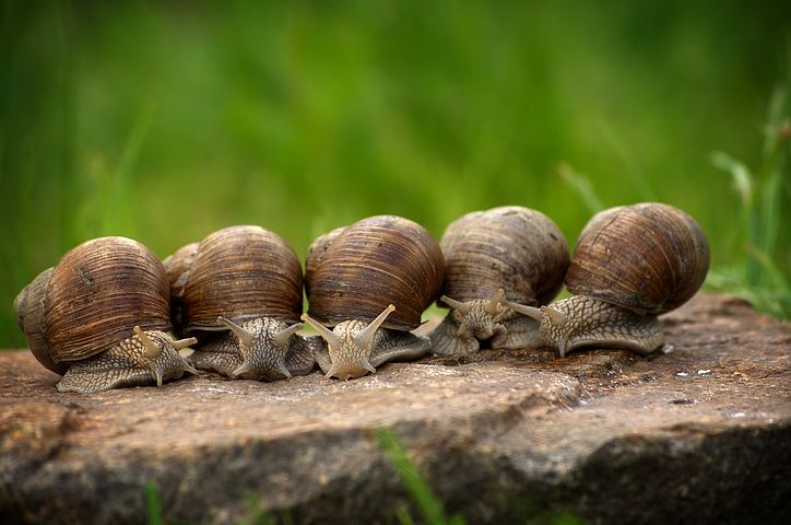 Snails are all over your garden