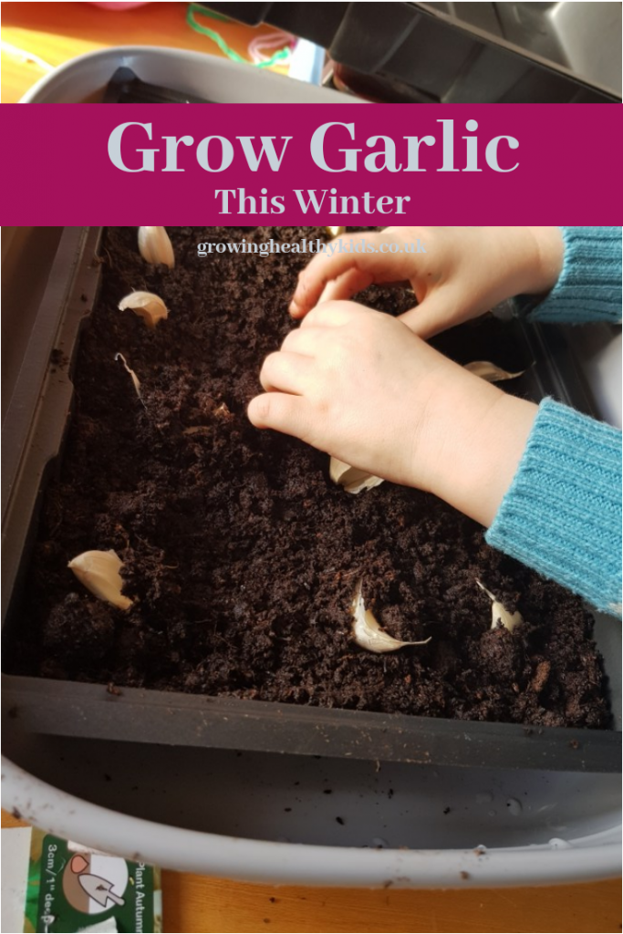 Plant garlic in winter