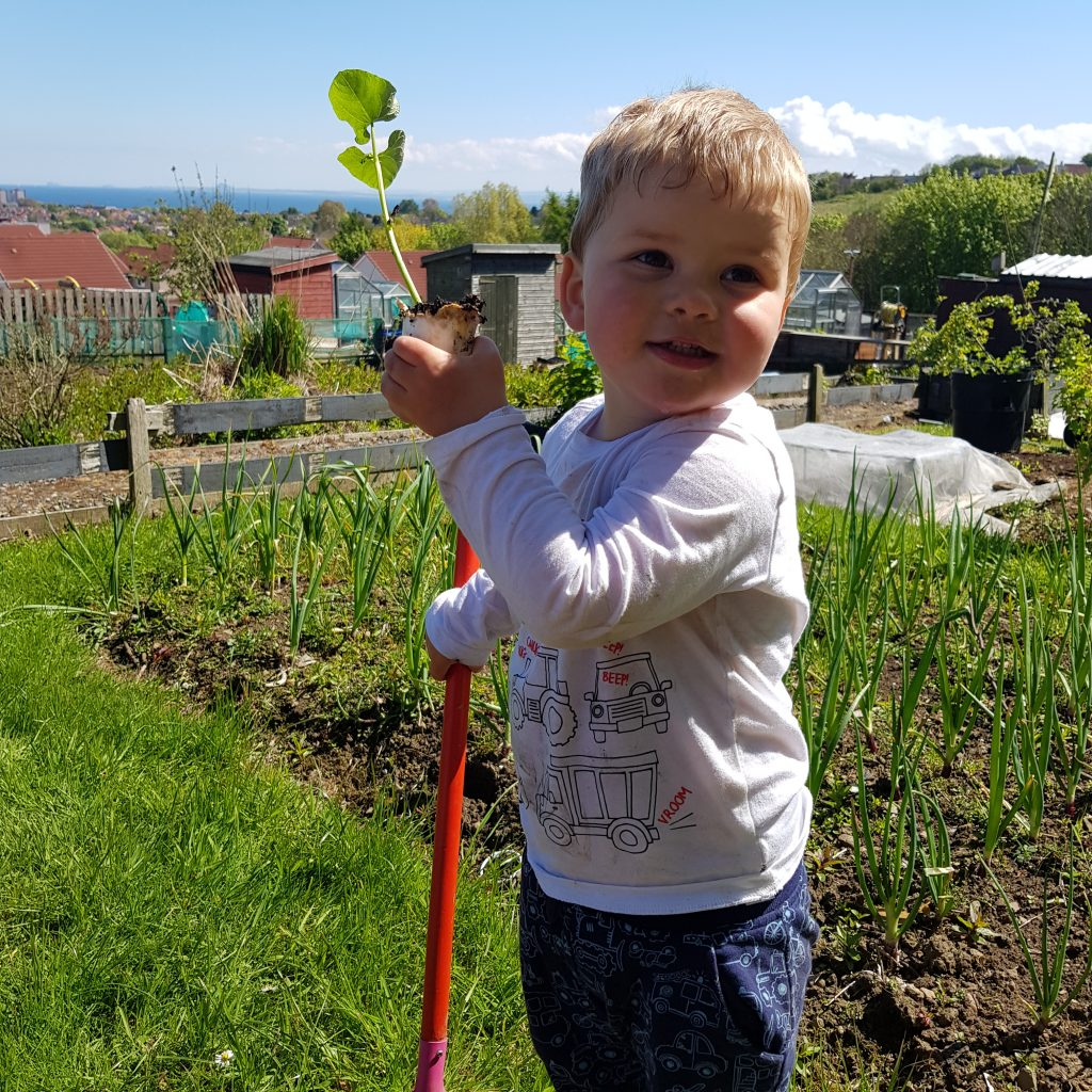 even with kids you can find time to grow vegetables