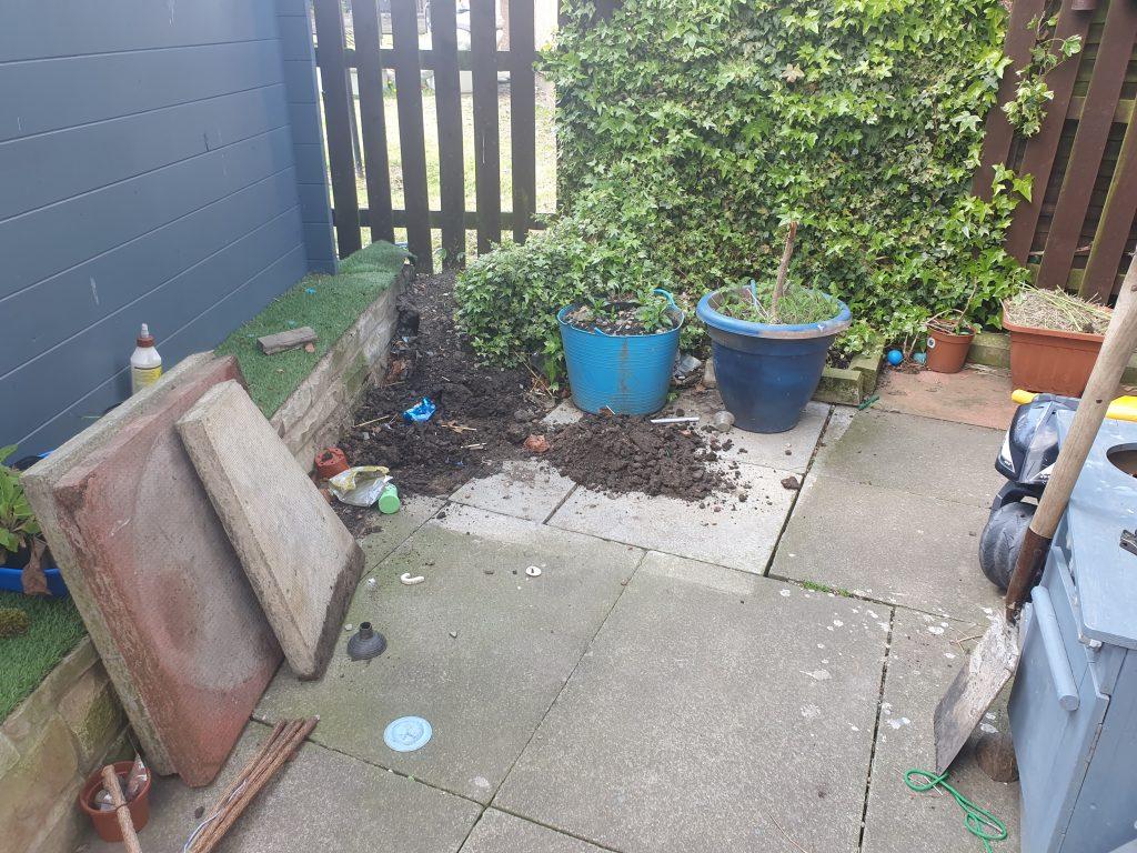 beginning a mini garden pond in a pot