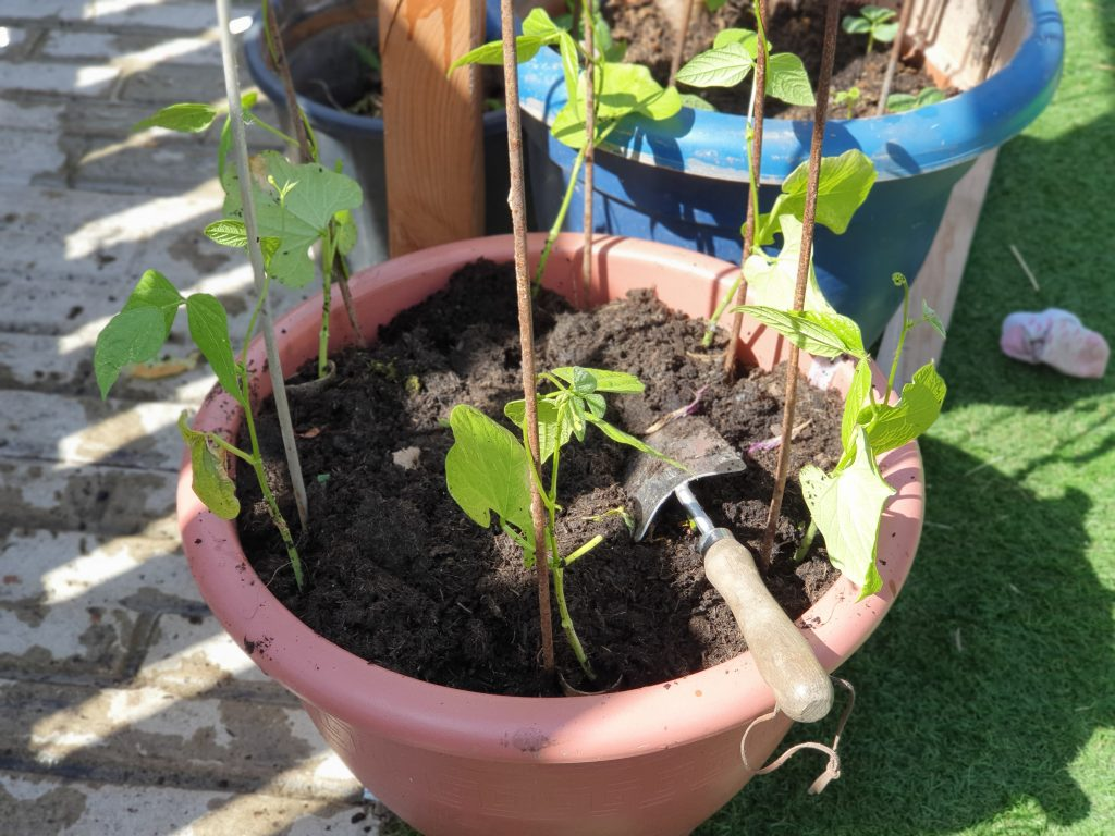 Grow vegetables in pots to extend harvest