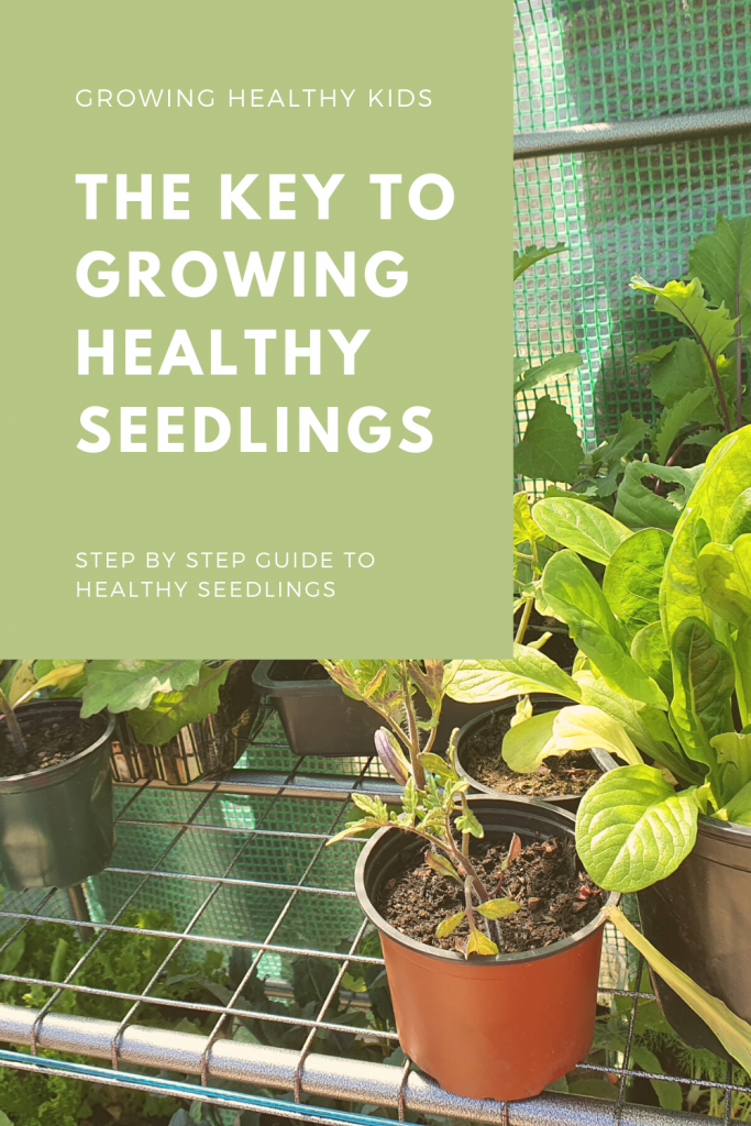 Learning how to care for your seedlings is fundamental to produce healthy vegetable garden plants from pricking out, hardening off and transplanting..