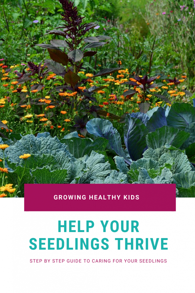 Learn how to care for your seedlings is fundamental to produce healthy vegetable garden plants in your Vegetble garden.