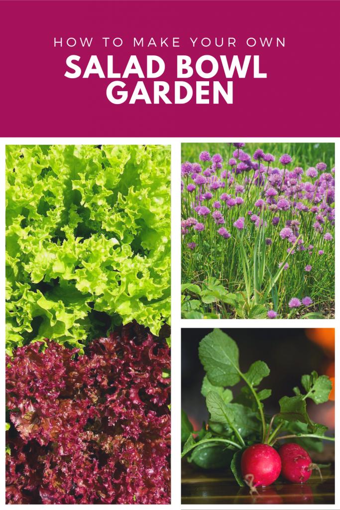 Grow.amazing tasty salads in an Indoor salad garden