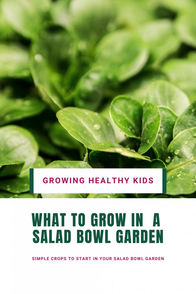 Grow salad bowl garden is super easy with our step by step guide so having fresh nutrient packed vegetables to feed your family