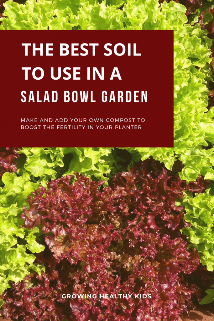 Growing your own lettuce in an indoor salad garden is super easy with our step by step guide so having fresh nutrient packed vegetables