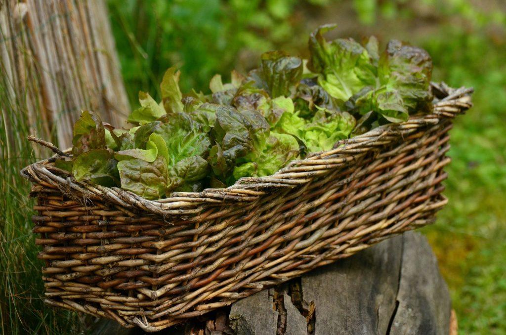 Make a salad bowl indoors or a basket