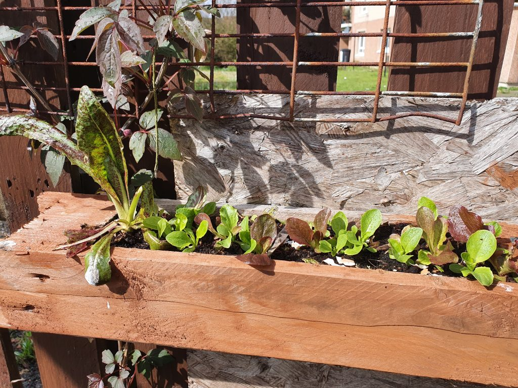 Raised bed garden information and ideas