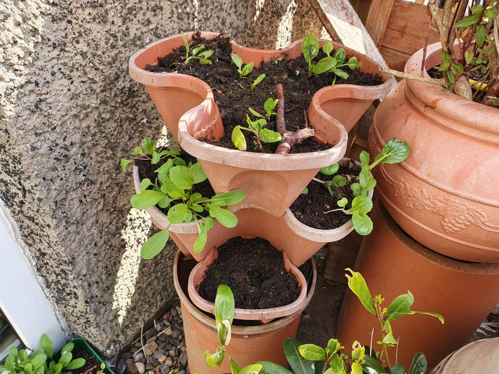 Raised bed in the form of a strawberry stackable planter.