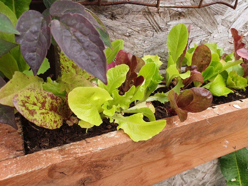 Diy Window box for salad growing